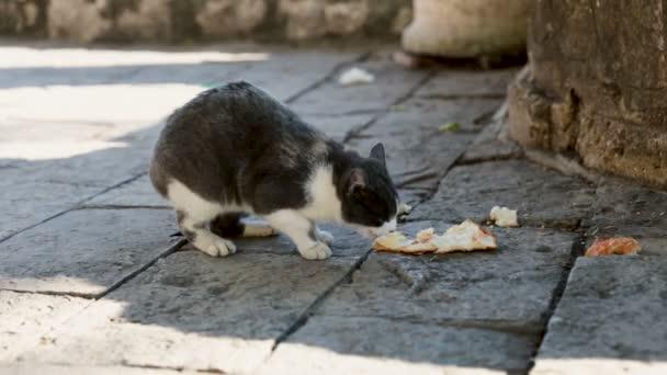 Kisállat ülő földre, macska étel elfogyasztása kint a parkban. Étkezés a padló hazai kitty