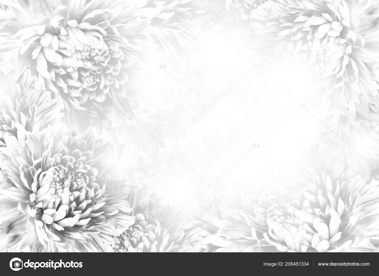 Floral Gray White Beautiful Background Flower Composition Frame