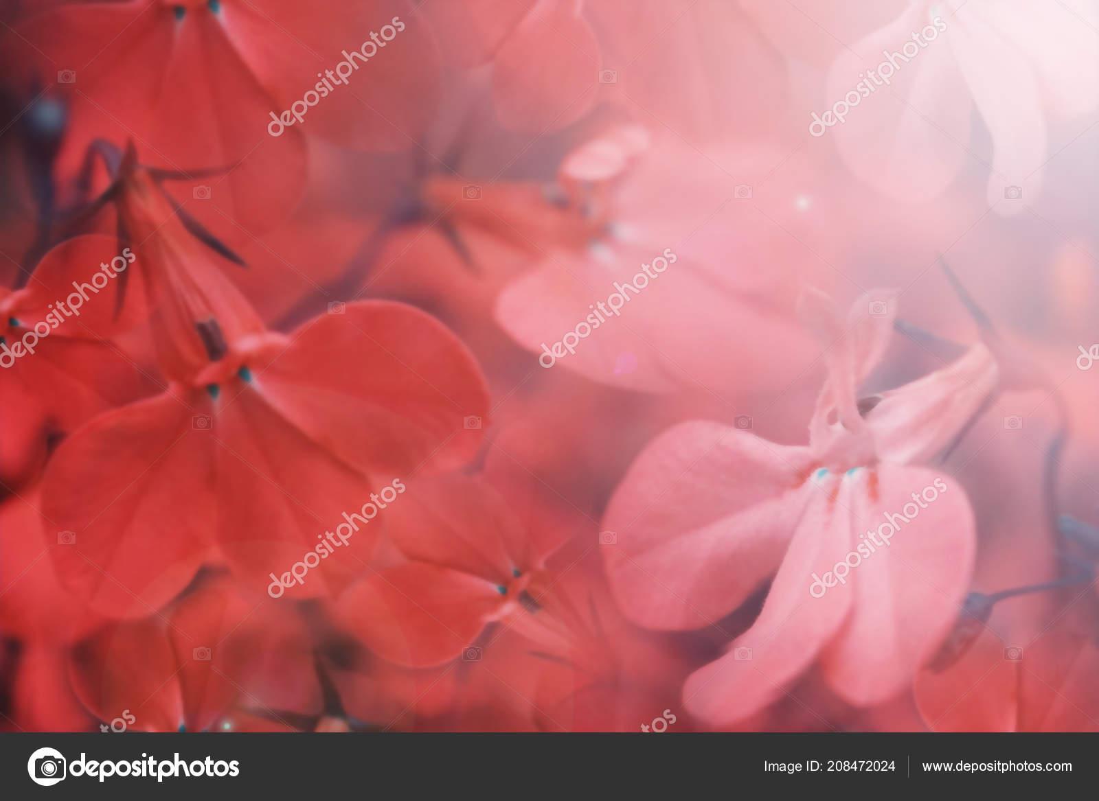 Красивый фон красные цветы