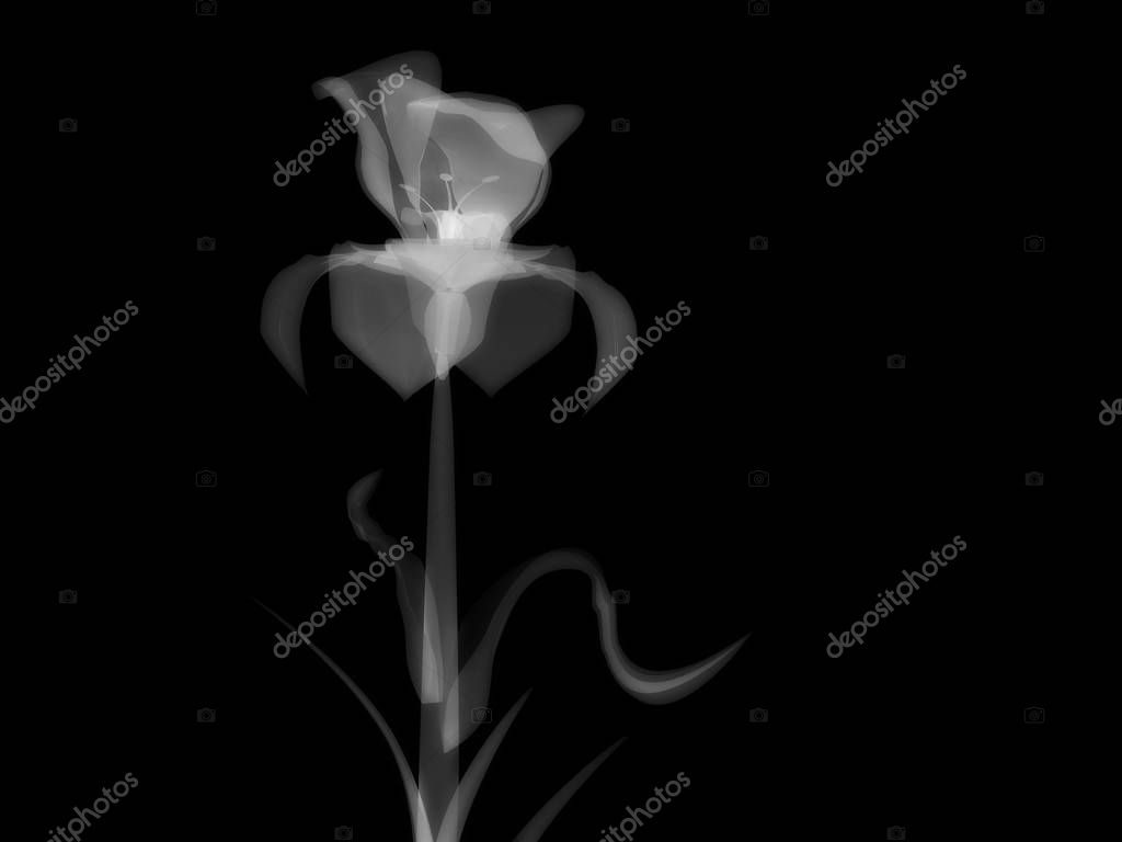 Radiography flower photo, macro on dark, x-ray