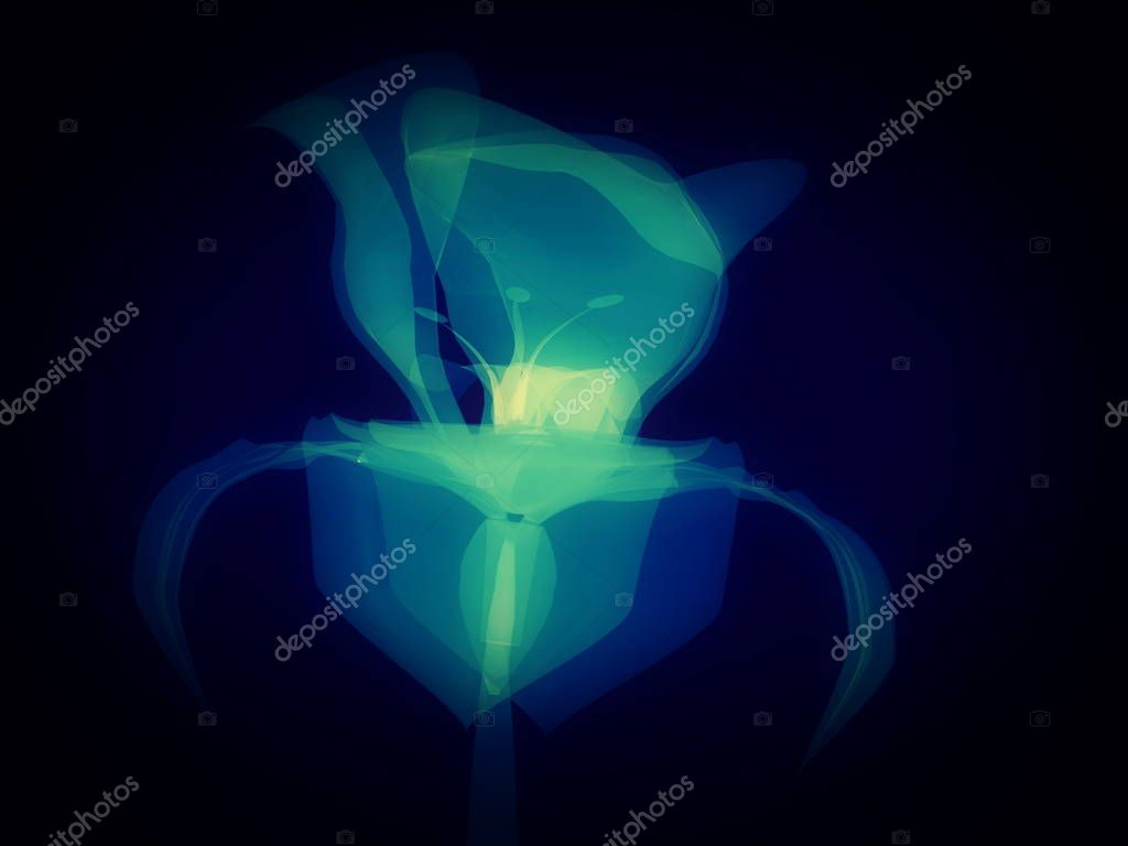 Radiography flower, macro on dark, x-ray