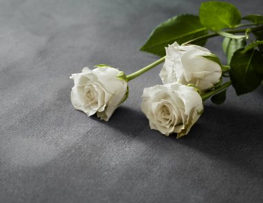 Beautiful white roses on a grey stone background. Funeral symbol with copy space