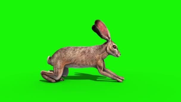Kaninchen sprang Seite grünen Bildschirm 3D-Rendering-Animation