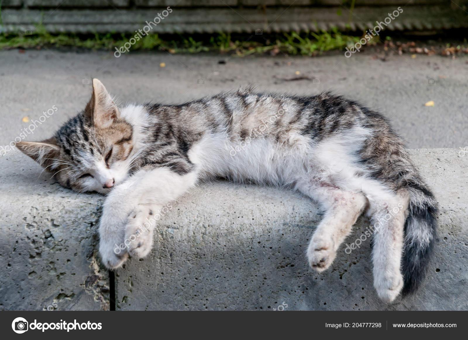 tuk chlupatý eben kočička fotky