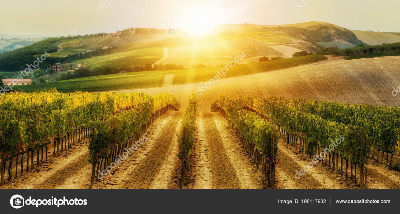 Vineyard Landscape Tuscany Italy Tuscany Vineyards Home Most