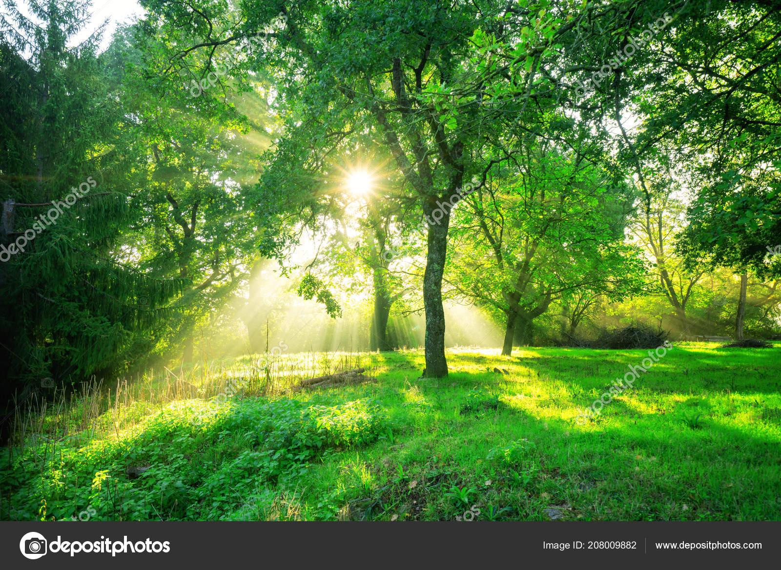 Green Forest Background Morning Sunrise Spring Season Nature