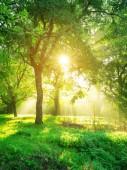Zelený Les pozadí s ranní východ slunce v jarní sezóně. Přírodní krajina.