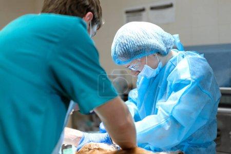 Photo pour Dentisterie vétérinaire. Vétérinaire dentiste chirurgien avec un assistant nettoie et traite les dents du chien sous anesthésie sur la table d'opération dans une clinique vétérinaire. Assainissement de la cavité buccale . - image libre de droit