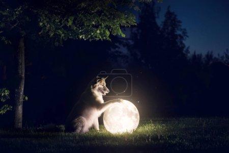 Photo pour Chien et lune. Paysage nocturne - image libre de droit