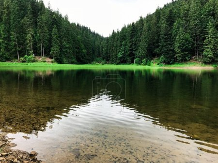 Photo for Photo of surrounded with pine trees mountain lake. Synevyr. Ukraine - Royalty Free Image