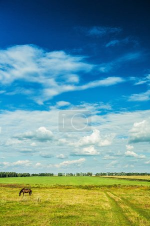 vertical version rural view green field and cloudy sky