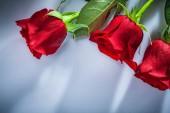 """Постер, картина, фотообои """"Букет роз на белом фоне"""""""