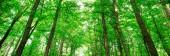 """Постер, картина, фотообои """"Лесные деревья. Природа стола Зеленый дерево солнечного света"""""""