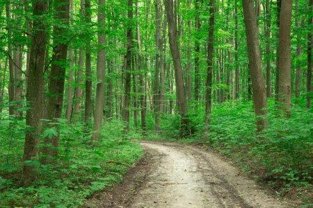 Photo pour Arbres de la forêt. origines du vert bois soleil nature - image libre de droit