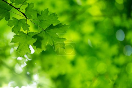 Photo for Green leaves on the green backgrounds - Royalty Free Image