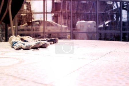 Photo pour Gants de travail jetés occasionnellement sur la table sur le fond de la serre en verre dans le pays - image libre de droit