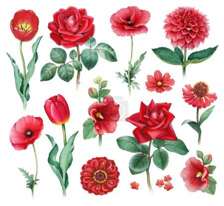 Photo pour Illustrations aquarelles de fleurs rouges - image libre de droit