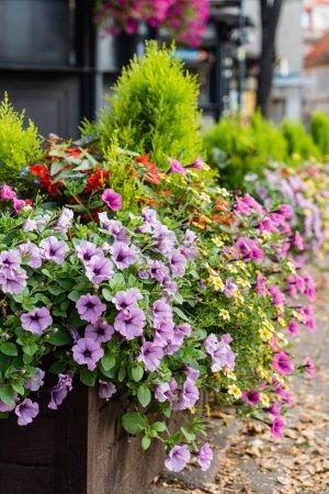 Photo pour Jardinage en pot de fleurs. Flore - image libre de droit