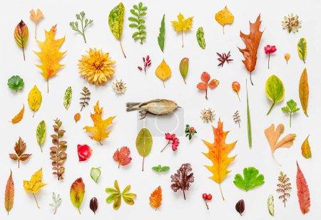 Photo pour Oiseau mort et feuilles d'automne sur le fond blanc - image libre de droit