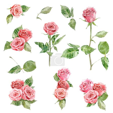 Photo for Collection of roses and floral elements for your design. watercolor painting - Royalty Free Image