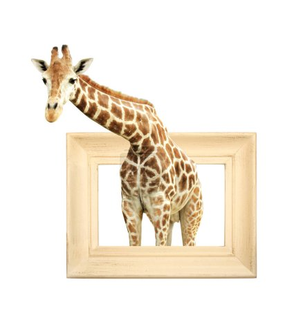 Photo for Giraffe in wooden frame with 3d effect. Isolated on white background - Royalty Free Image