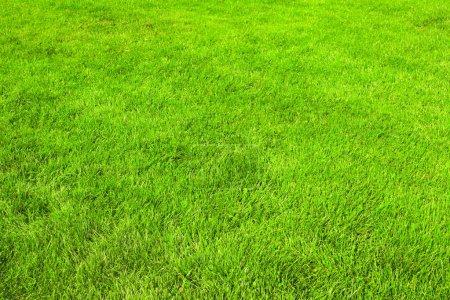 Photo pour Nature herbe verte fond, pelouse parée - image libre de droit
