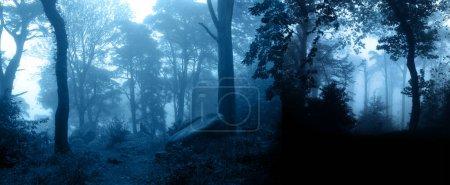 Photo pour Bannière horizontale avec scène nature nocturne. Paysage mystérieux avec des arbres et des buissons dans la forêt brumeuse. Photo tonique en couleur bleue - image libre de droit