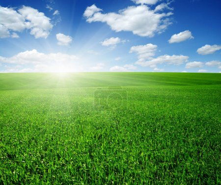 Photo for Green field, blue sky and sun. - Royalty Free Image