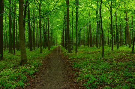 Photo for Green forest and the path - Royalty Free Image