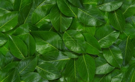 Photo for Green leaves background. Leaf texture. Nature concept - Royalty Free Image