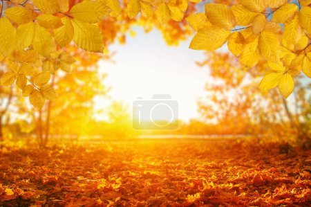 Photo for Autumn leaves on the sun and blurred trees . Fall background. - Royalty Free Image