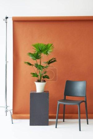 Photo pour Matériel de studio de photographie. Fond en papier marron, chaise noire et paume - image libre de droit