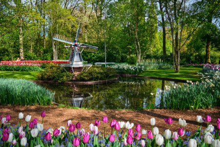 Photo pour Keukenhof jardin de fleurs, l'un des plus grands jardins de fleurs du monde. Lisse, Pays-Bas . - image libre de droit
