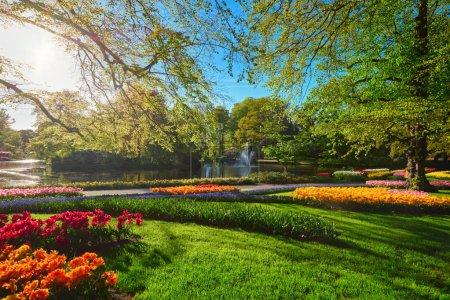 Photo pour Jardin fleuri Keukenhof avec parterres de tulipes en fleurs. Un des plus grands jardins fleuris du monde. Lisse, Pays-Bas . - image libre de droit