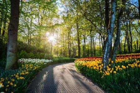 Photo pour Chemin dans le jardin fleuri de Keukenhof avec parterre fleuri de tulipes - l'un des plus grands jardins fleuris au monde au coucher du soleil. Lisse, Pays-Bas . - image libre de droit