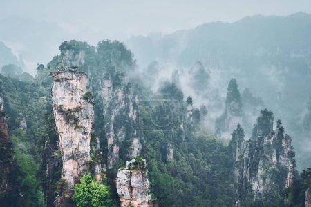 Photo pour Célèbre attraction touristique de la Chine - Zhangjiajie piliers de pierre falaise montagnes dans les nuages de brouillard à Wulingyuan, Hunan, Chine - image libre de droit