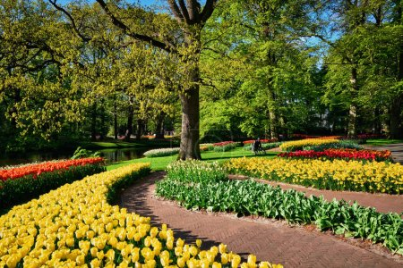 Photo pour Jardin fleuri de tulipes roses dans le jardin de fleurs Keukenhof, également connu sous le nom de jardin de l'Europe, l'un des plus grands jardins de fleurs du monde et attraction touristique populaire. Lisse, Pays-Bas. - image libre de droit
