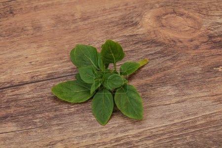 Photo pour Assaisonnement aromatique - feuilles de basilic vert sur la branche - image libre de droit