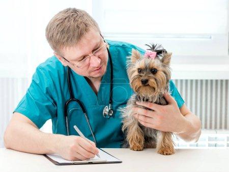 Veterinarian holding dog on hands at vet clinic