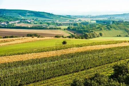 Photo pour Herbe verte fraîche et blé sur les champs ensoleillés de Moravie, République tchèque - image libre de droit