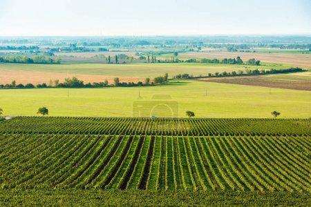 Photo pour Les agriculteurs travaillent dur sur les champs généreux de la grande Moravie - image libre de droit