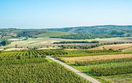 Photo pour Beau lever de soleil sur les vignobles voisins, Moravie méridionale, République tchèque . - image libre de droit