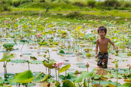 SIEM REAP, CAMBODIA - JUNE 11, 2018: Boy on lotus field at Lotus farm near Siem Reap, Cambodia in a summer day