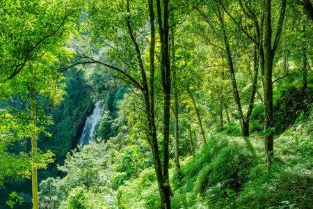 Photo pour Nature de la montagne descend à l'eau et de verdure, beau paysage nature papier peint - image libre de droit