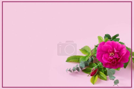 Photo for Beautiful pink rose with green eucalyptus  and place for your text on delicate paper background. - Royalty Free Image