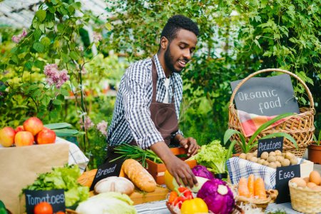 Photo for Handsome African American salesman putting fresh organic vegetables on table at farm sale in greenhouse. Farming, small business and healthy food concept. - Royalty Free Image