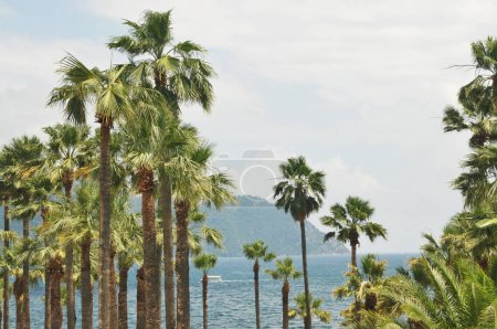 Palm trees on beach with sea against mountains and white sky