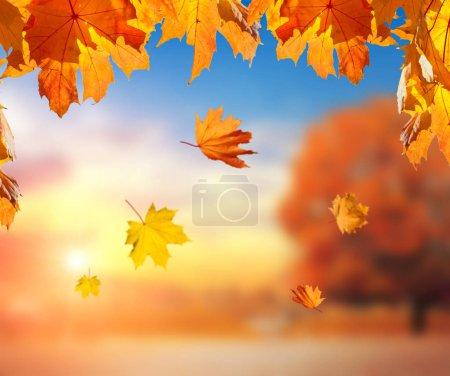 Photo pour Feuilles d'érable orangées en chute libre sur fond flou et parc d'automne - image libre de droit