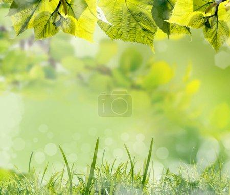 Foto de Las hojas verdes y la hierba sobre fondo de la naturaleza primaveral difuminada - Imagen libre de derechos