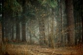 Misty landscape with forest at early morning